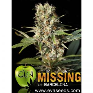 missing-in-barcelona (1)