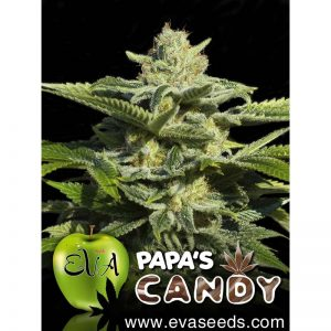 papas-candy