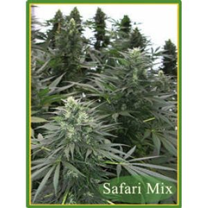 Safari Mix Regular - Mandala seeds