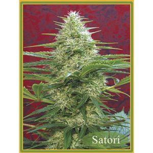 Satori Regular - Mandala seeds