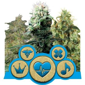 cbd mix royal queen seeds