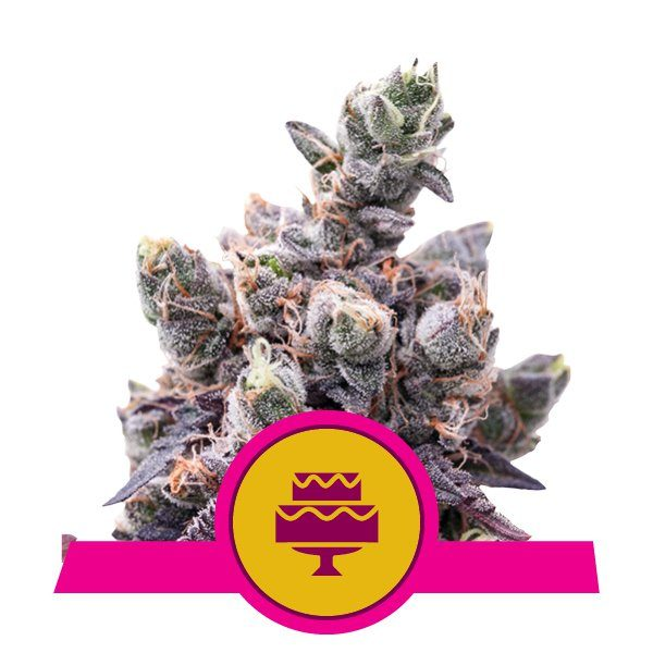 wedding gelato royal queen
