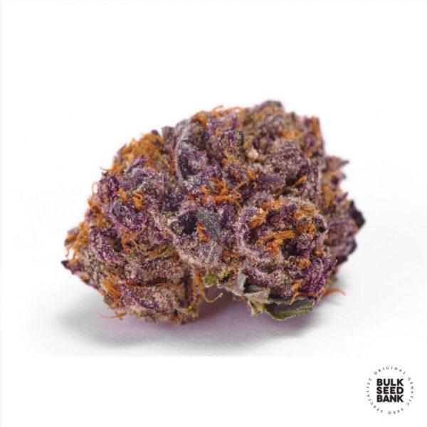 purple glam kush bulk seedbank