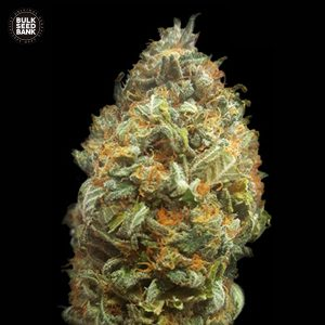 auto original orange bud bulk seedbank