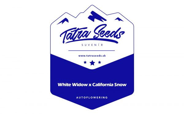 AUTO WHITE CALIFORNIA