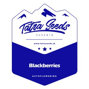 AUTO BLACKBERRIES - TATRA SEEDS