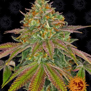 Wedding Cake - Barney´s Farm