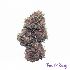 CBD Purple Berry